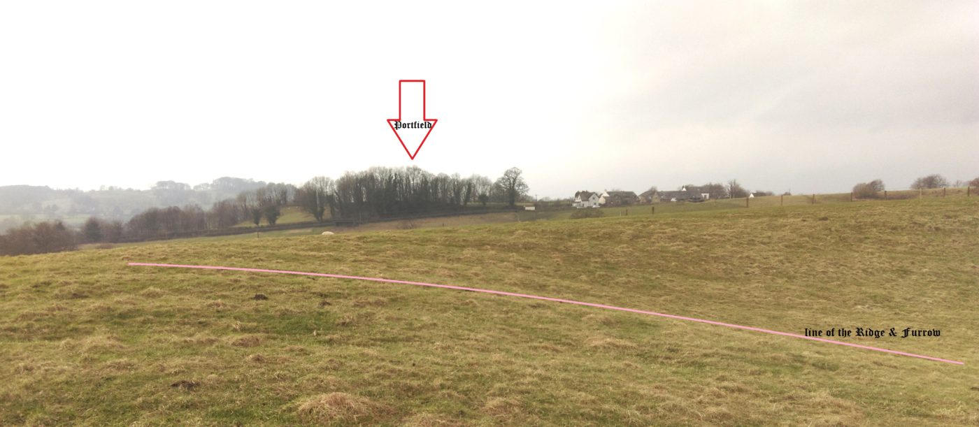 View back to Portfield (arrow) showing the ridge & furrow (pink line) in the pit